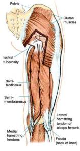 proximal_hamstring_tendinopathy